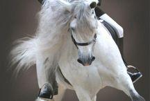 Horses / Visit me at http://www.renaissancemama.com!