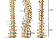 Anatomía columna vertebral
