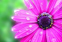 Flowers / Pretty Flowers  / by Amber Walker