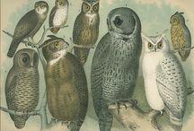 Owls.  / by Erin Jumper