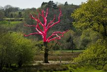 The Pink Tree / Diseased oak tree painted by artist Henry Bruce as part of the Delamore Arts exhibition