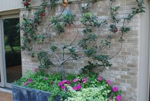 espalier trees / by work of whimsy
