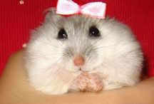 Cele mai drăguțe animale♥♥