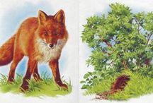 Erdei állat