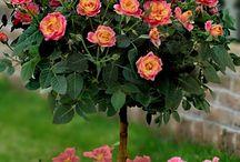 flowers / by Michelle Rainey-Crutchfield