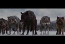 Videos Wolf