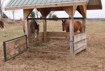 Hay, Feed, Water Management for Horses