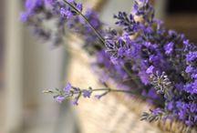 Colors // Lavender