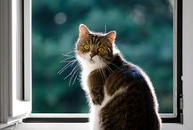 Kattepuser/ Cats