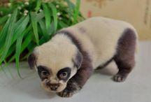 câine panda