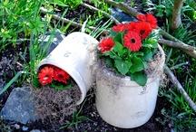 Flowers  and  Gardening / by Lynda Sweezey