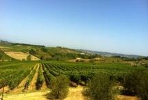 Tuscan wine world