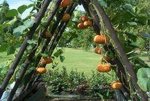Trellis gardens