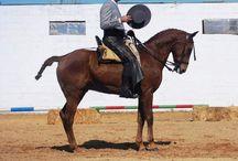 Equitación y Entrenamiento