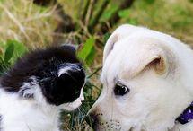 Állatkák&Barátság
