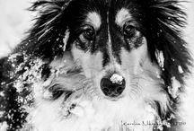 Psie Zimowanie / Facebookowy konkurs - Psiastkarnia Pookie's Cookies & GODOG