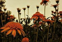 Souto Garden / Full sun garden at Juniper Level Botanic Garden