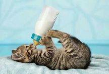 молоко сос