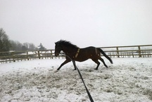 Barathea Blazer / TB (Thoroughbred), born in 1999 Owned by Bettine Evans  Barathea was previously a successful racehorse.