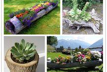 Ogród ciekawe / Informacje o roślinach, projekty kwietników, donic