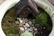Fairy Gardens & Phoebe projects / by Trina Bruner