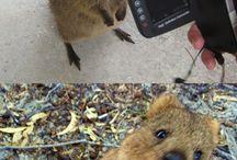 Australian querky natives