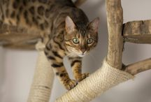 Breathtaking Cats / The most beautiful, gorgeous, unusual, and amazing cats on the internet.