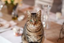 It's a Nice Day for a Cat Wedding / Cats, cats, cats. And more cats. / by Tidewater and Tulle
