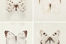 Butterfly / by Hoperalab