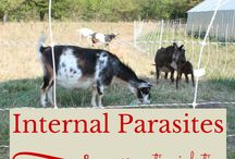 GOATS / Selection, feed, breeding, milking, and natural care of goats!