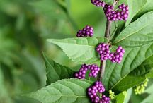 Gardening & Outdoor Inspiration / Tips on creating beautiful outdoor living opportunities.