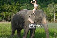 Hot girls riding elephants / Hot girls riding elephants