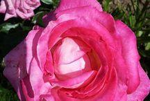 Wirtualny Florysta – Twój florystyczny doradca / Wirtualny Florysta – Twój florystyczny doradca