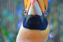 Pássaros / Pássaros do mundo