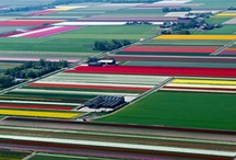 landscape art.photography / artistic photographies about something