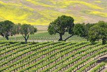 Santa Barbara Living at Rice Ranch / Explore life at Trilogy at Rice Ranch including the homes, amenities and activities, and the surrounding Santa Barbara area.