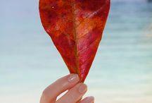 Hearts / by Diane Kwiatkowski