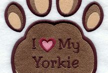 Yorkies... / by Martha Guillotte