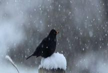 snow bby