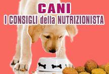 Consigli alimentazione cane