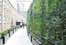 Artificial Green Walls - Exterior / We Design, Manufacture and Install (UK) and Export all of our Green Walls, the range includes an Exterior Option.  This is where we use Exterior Grade Foliages and have had the panels wind tested to 70 mph. They are a great alternative to areas that just aren't suitable for Living Walls due to the Lighting or Environment.