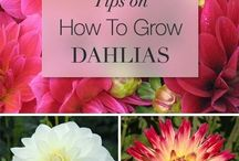 how to grow....