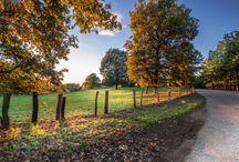 Δρυοδασος Φολοης. foloi oak forest. / Δρυοδασος Φολοης. foloi oak forest. Eλλαδα - Ν. ηλειας. Greece. ALL PHOTOS ARE MINE