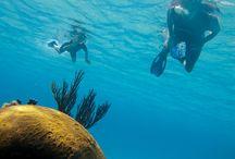 Under the Sea Hui / Under the sea