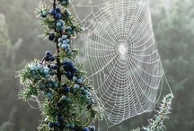 Το κέντημα της αράχνης