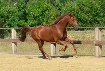 koně / Koně