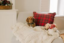 Not a home without a dachshund! / We believe any gorgeous home decor can be improved with the presence​ of a dachshund.  Other adorable small breed dogs happily welcomed as well!