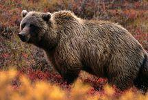 Outdoor Wildlife / by Gary Fertig
