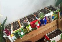Groenten verbouwen