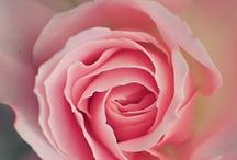 お気に入りの花達1